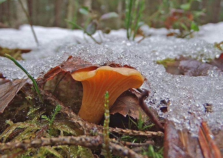 Схожу за грибами, проверю грибные места, после дождя.