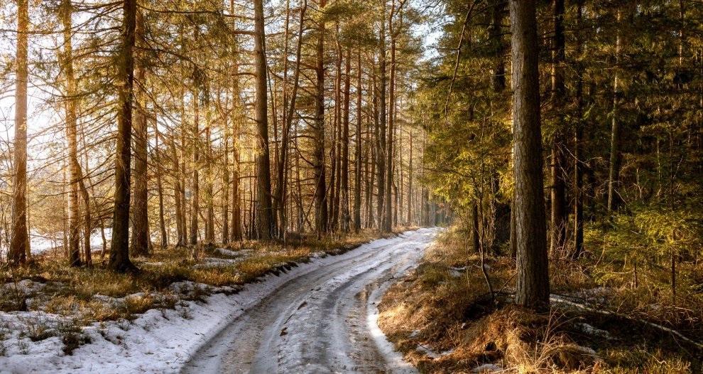Прогулка по лесу — лекарство против депрессии.