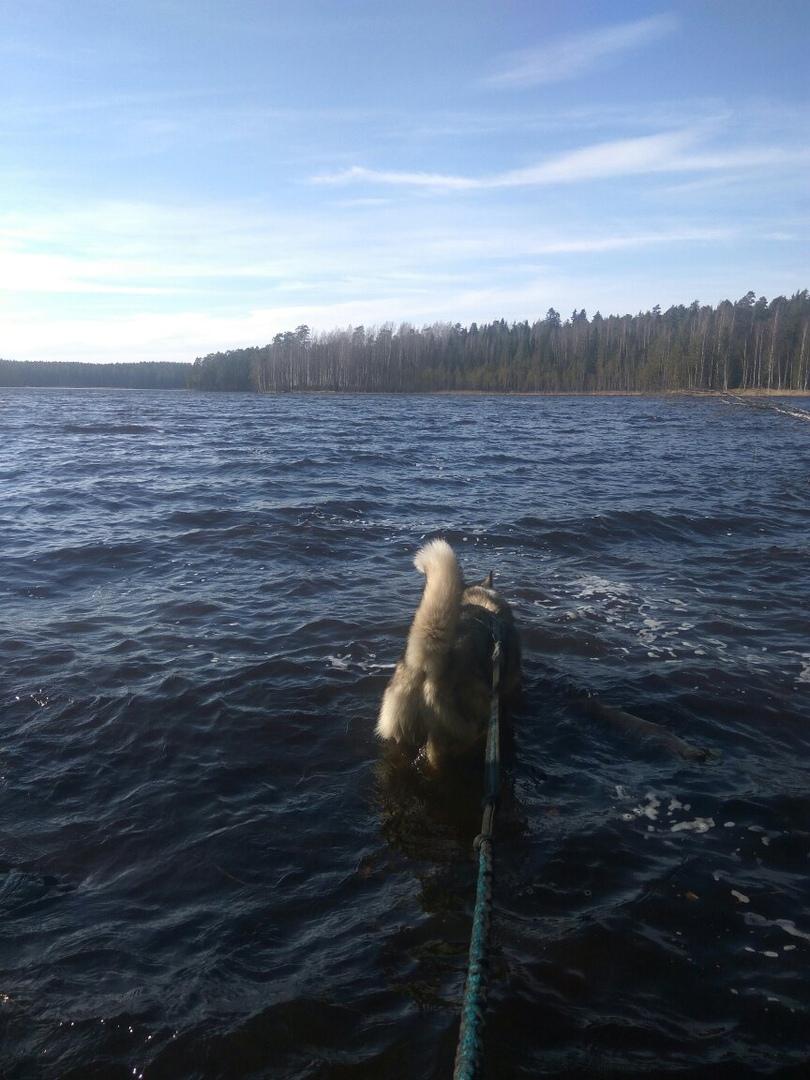 ричард купается