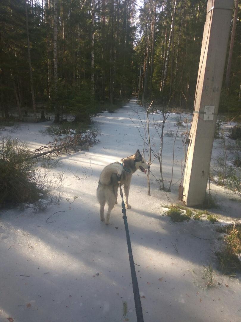 ричард на снегу