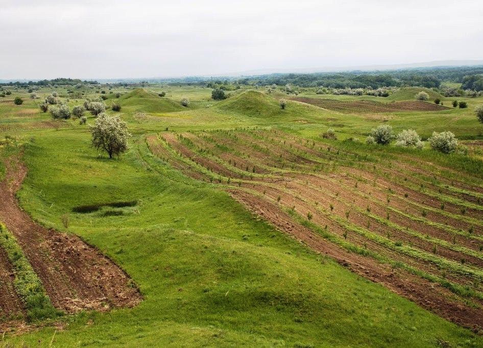 Как-то раз, исследуя окрестности деревни, Кирилл предположил, что холмы на картофельном поле — созданы викингами и в них обязательно должны быть клады…