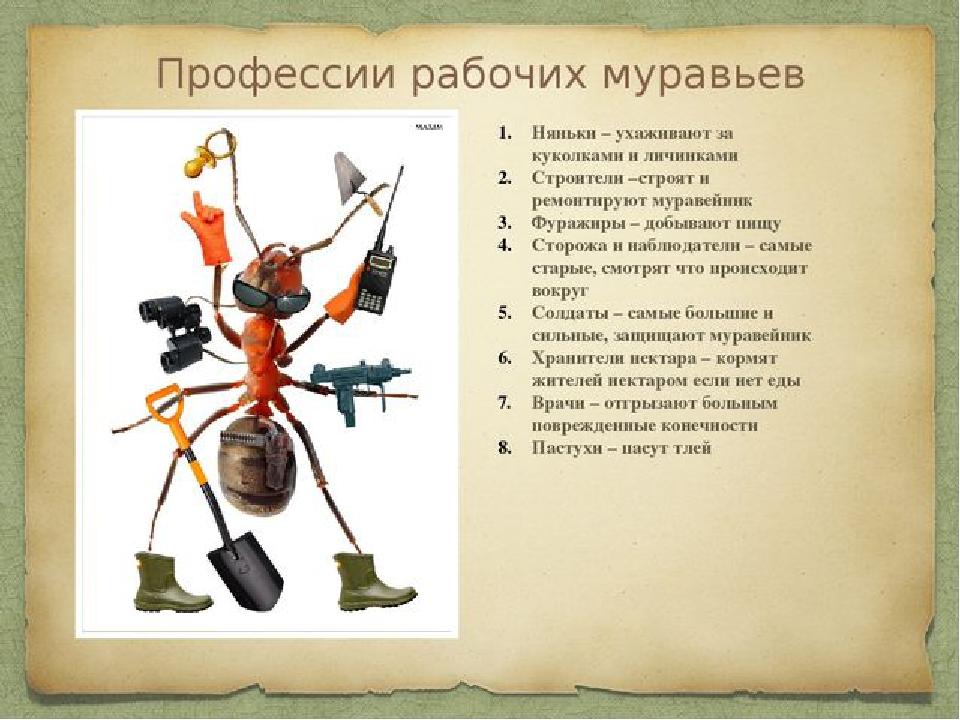 Кир задумался: «Какую профессию должен я выбрать, чтобы быть полезным семье муравьев?» Ответ Яна прозвучал у Кира в голове: «У тебя много таких качеств, которых нет ни у одного муравья и, знакомясь с муравьиными профессиями, ты можешь встать на самую высокую иерархическую ступень в федерации муравьев.» «Зачем мне эта ступень?» — подумал Кир. «Ты способен помочь муравьям…» — посылал Киру свои мысли Ян.