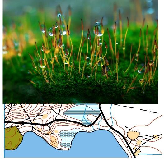 Кир мог сравнивать два этих образа — рисунок карты и пейзажи местности. Кир стал мысленно передвигаться по этой карте. Используя эту карту можно было быстро найти путь между различными объектами на местности. Если её обновлять - вечно, ответил Ян, - любой муравей может пользоваться этой топохимической картой, дополняя её феромонами увиденной местности.