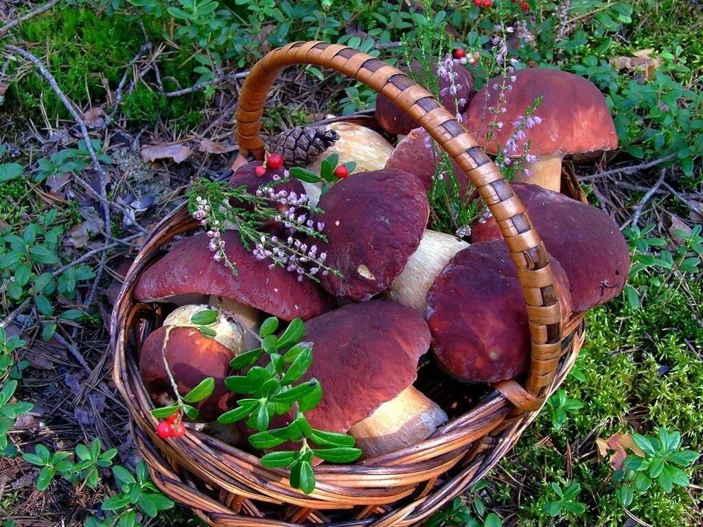 Кончилась тропинка, заканчивался и день. Один-одинешенек стоял Кирилл с корзиной, набитой грибами, в поисках которых он с утра хороводился по лесу.
