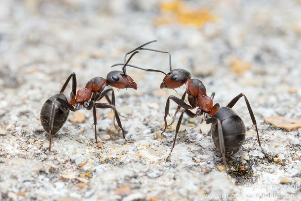 колонна муравьев