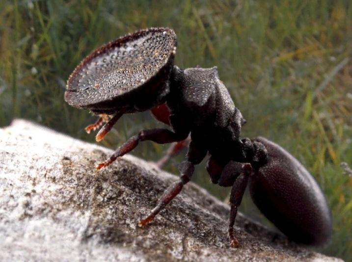 — У него должна быть большая голова…, — сказал Ян, указав на плоскоголового муравья… Кир взглянул на муравья с головой-щитом и подумал: «Зачем?» – …при необходимости он должен закрыть головой вход в город, — услышал Кир конец фразы Яна.