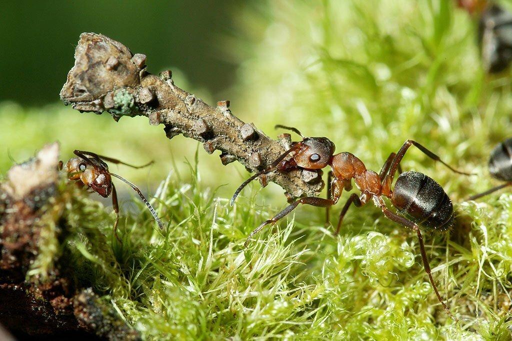 Важно чтобы карта соответствовала местности. Её надо корректировать, резюмировал Ян, - многие объекты местности изображенные на этой карте муравьи из-за своих размеров опознать не могут. Наша карта должна быть более подробной и отражать те объекты, которые мы можем опознать.