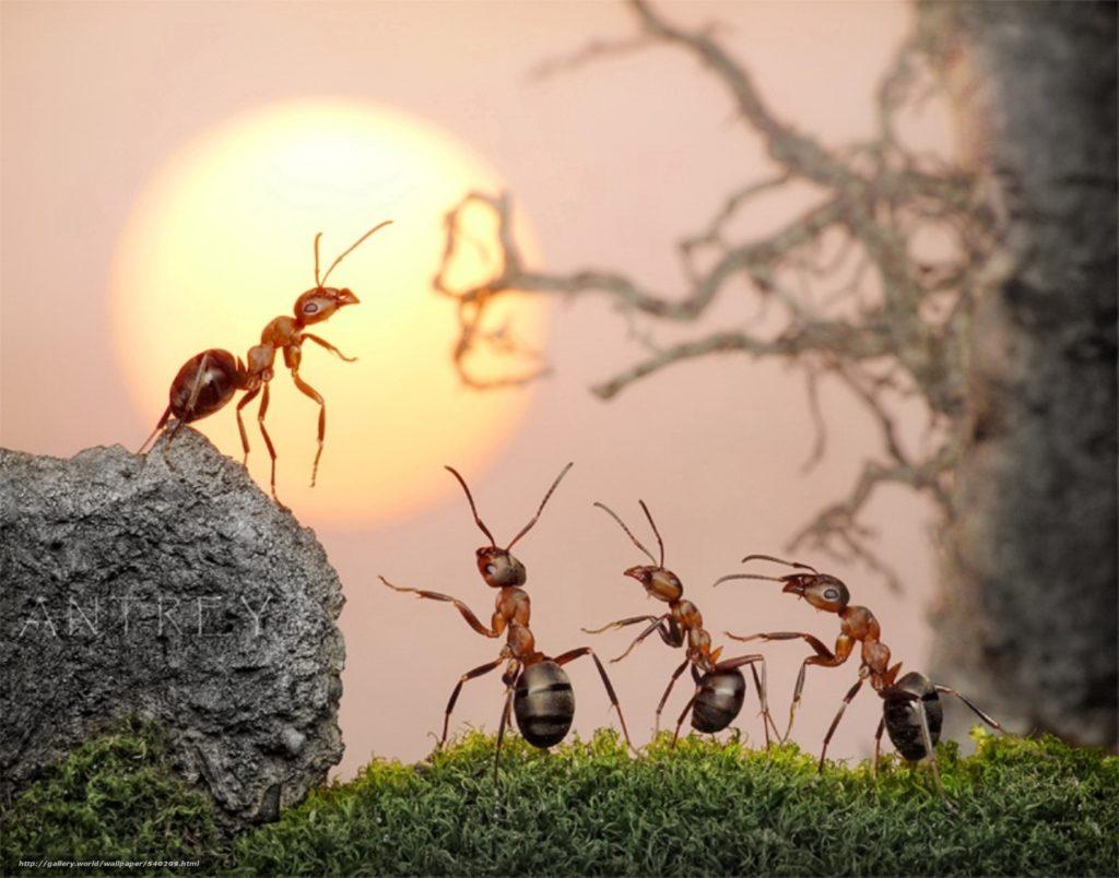 Муравьи умеют ориентироваться по солнцу