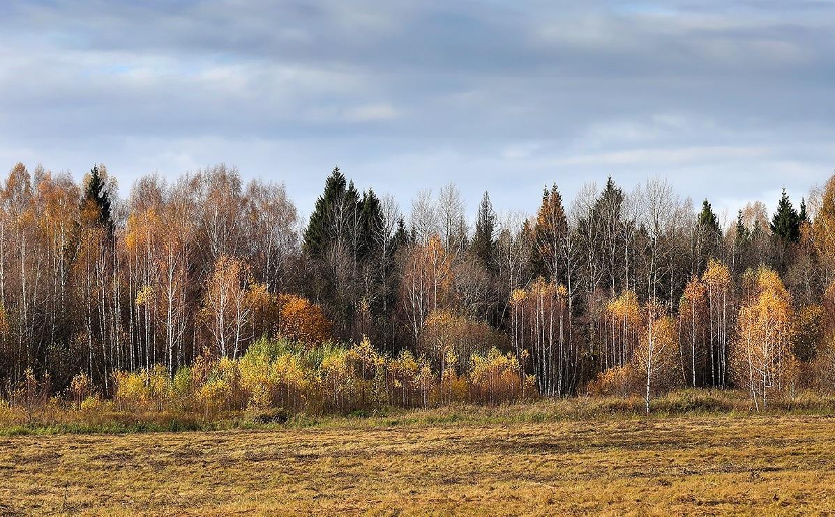 Осенний рогейн — для сильных духом