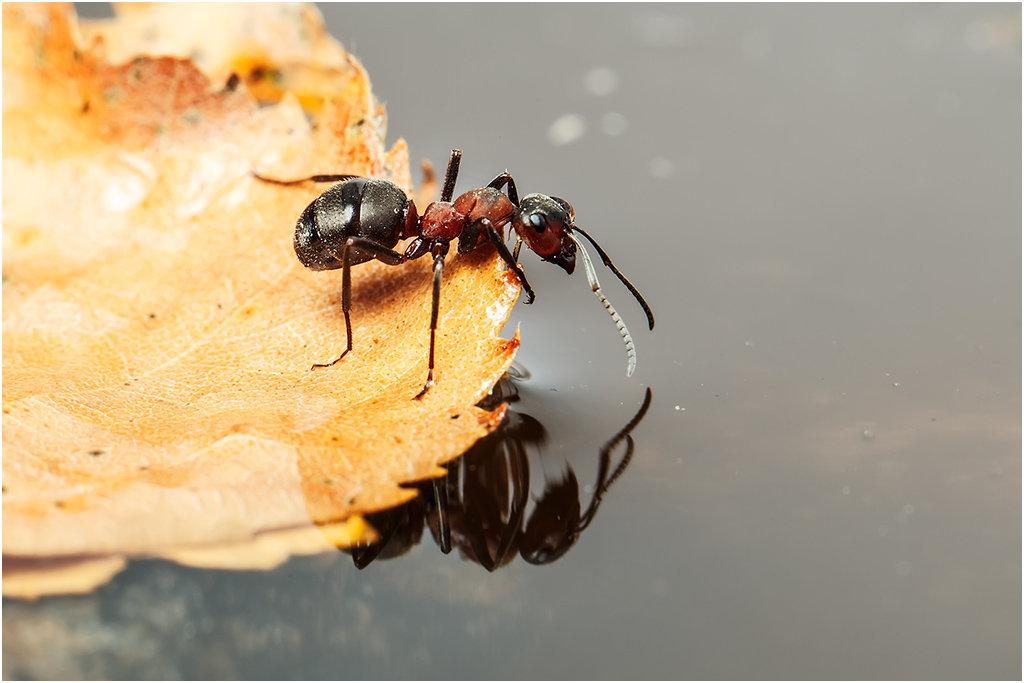 Надо для муравьев устроить возвышения по берегам озера, чтобы они могли хорошо видеть всю карту, а для меня построить плот, чтобы я мог плавать над картой