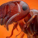 Но ещё больше поразил Кира муравей, стоявший на задних лапах у сруба, он поворачивался: то в профиль, то в фас. демонстрируя свою голову, грудь, брюхо и ноги, как будто отлиты из золота. Его голова сердцевидной формы была оснащена парой усов, расположенных в ямках между глазами. Каждый ус состоял из 12 членов. Муравей производил впечатление восьминогого паука.