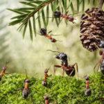 Только помощь ближним может превратить маленького муравья в большого, который легко находит путь…