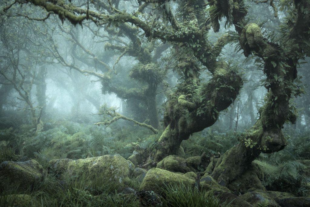 Что в лесу гулять в кроссовках – себя не уважать, так как высок риск и ногу подвернуть, да, и нельзя забывать о насекомых и змеях, которые будут иметь доступ до тела… На глаза нужны защитные очки, на руки – перчатки… На болоте в одиночку — опасно… Убегать от диких зверей – это подписать себе смертный приговор… Но, если зверь подходит сам, он болен – бешенство. Ясно, укусит! Разводить костер… Сидеть, лежать на голой земле… Пробовать на вкус растения, грибы… Пить воду из ручьев, родников… И, грызуны употребляют воду из этих же источников… Входить в лес без навигатора — можно так плутануть… Ну и ещё, главный совет, если в лесу увидел человека лучше себя не обнаруживать!»
