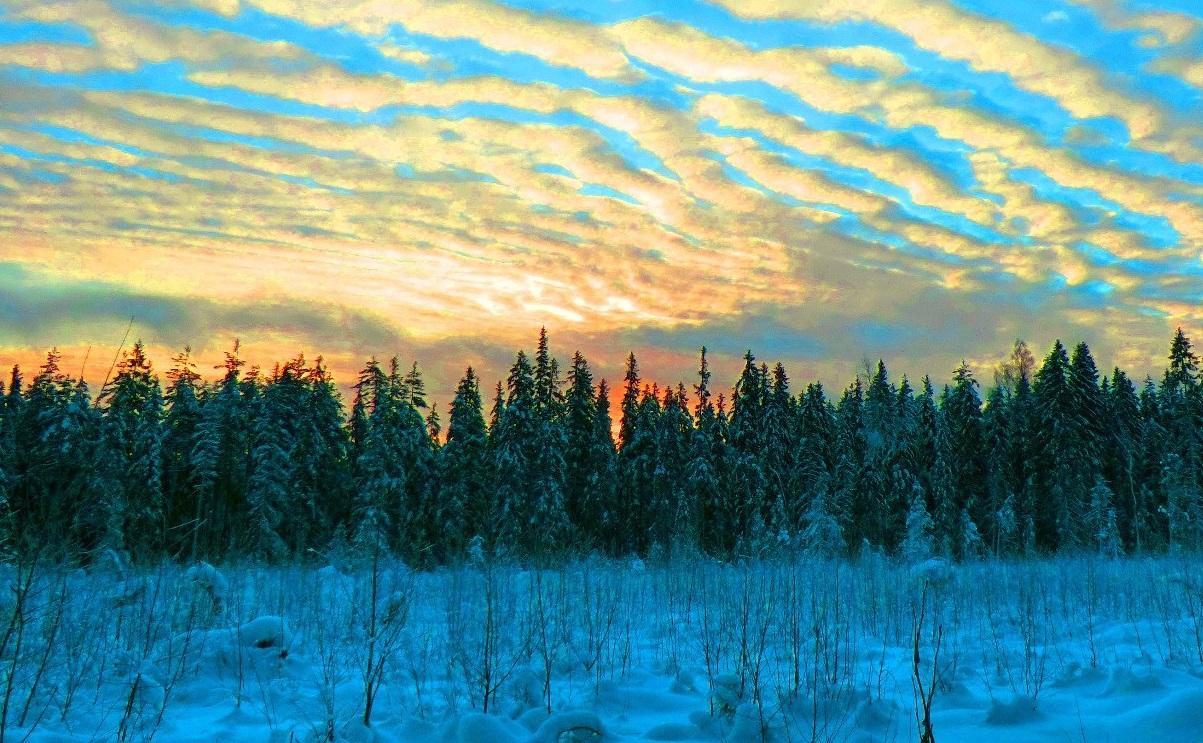 Зимний рогейн на лыжах