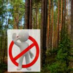 О принимаемых мерах по обеспечению запрета посещения лесов