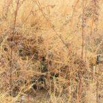 Вождь племени получает известие, принесенное собакой охотника, что в урочище Каменный мох лежит раненый охотник. Вождь посылает на поиск охотника следопытов.