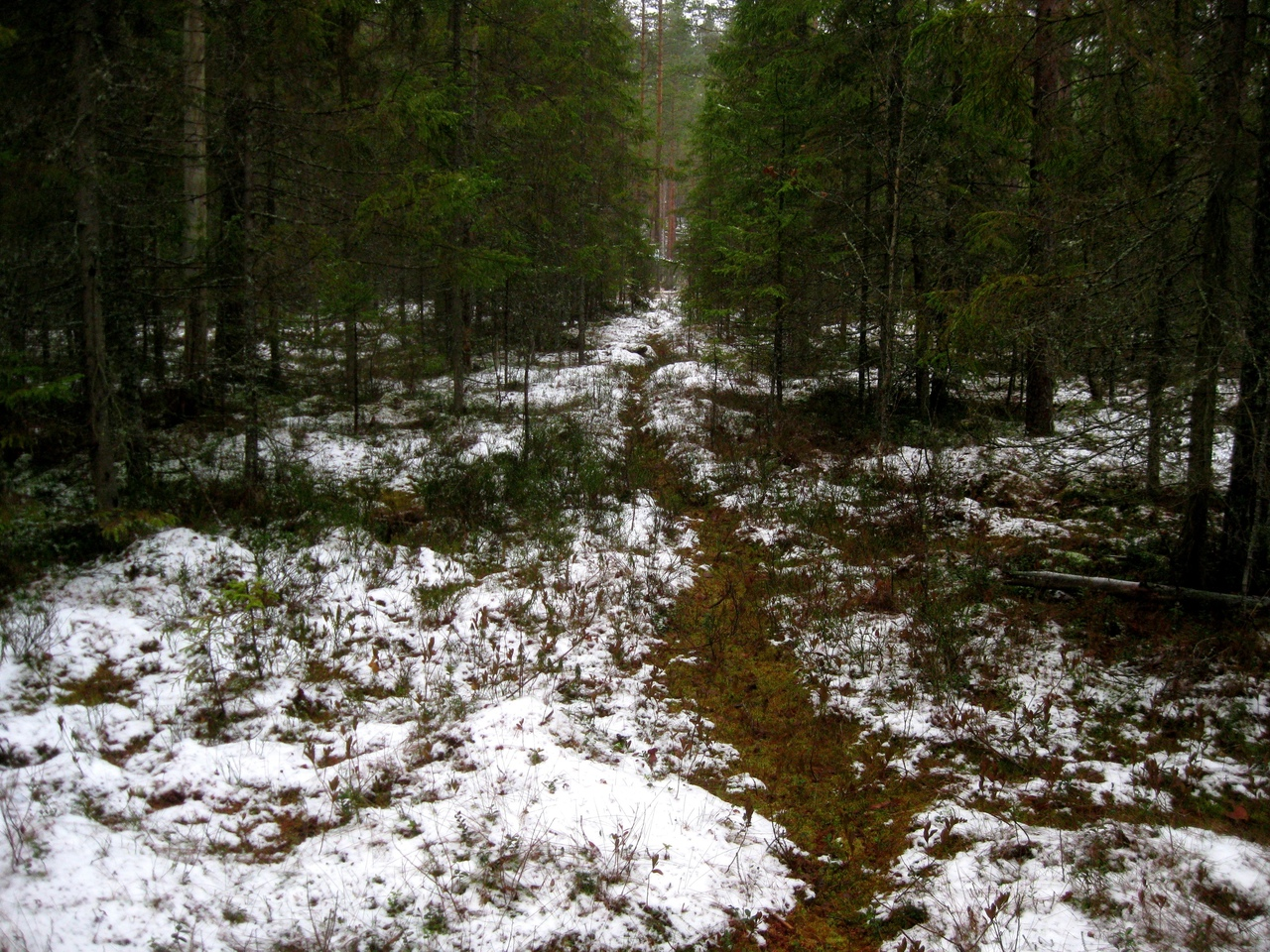 болотная тропа