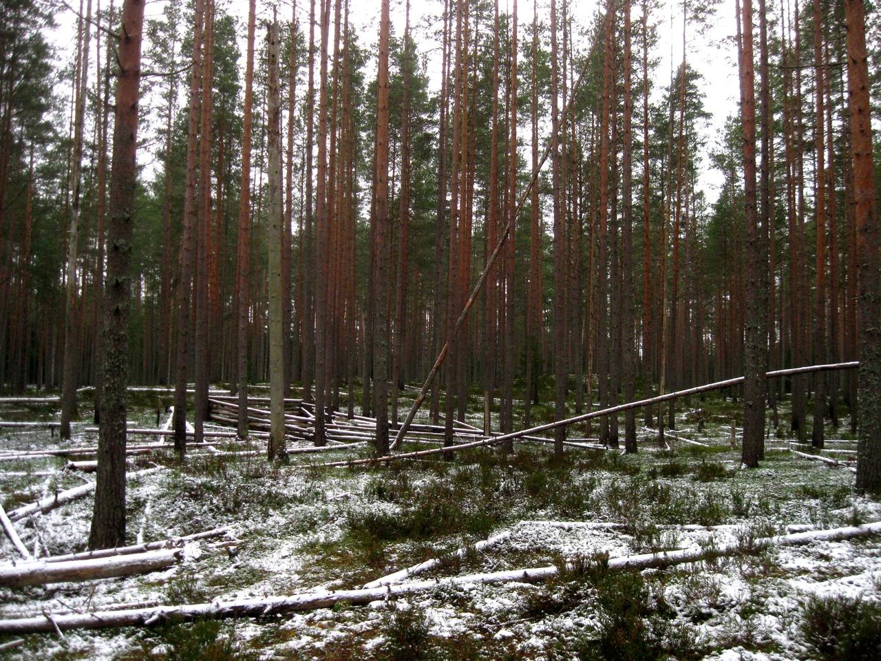 лес вповалку