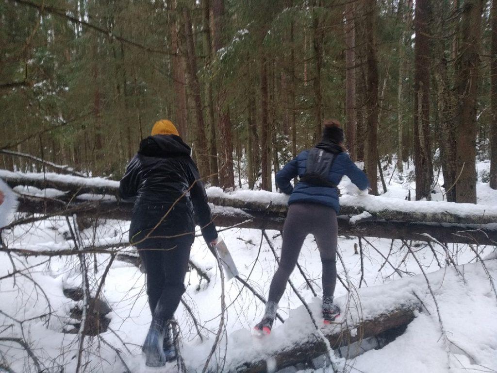 Лес, снег, болото, речки, тропинки, переправы